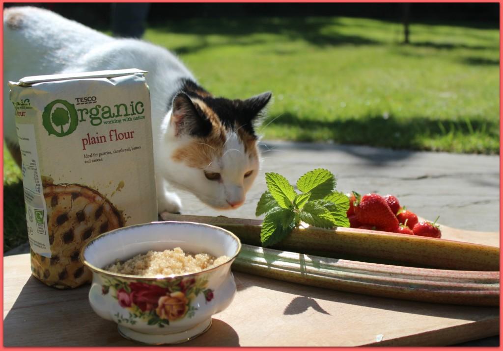 scandimummy_neighbours_cat