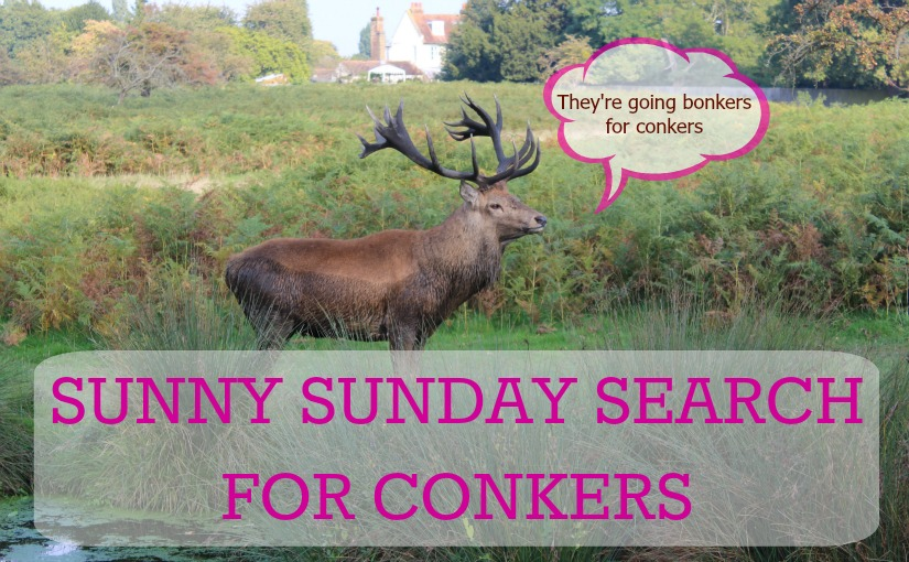 scandimummy_conkers_cover