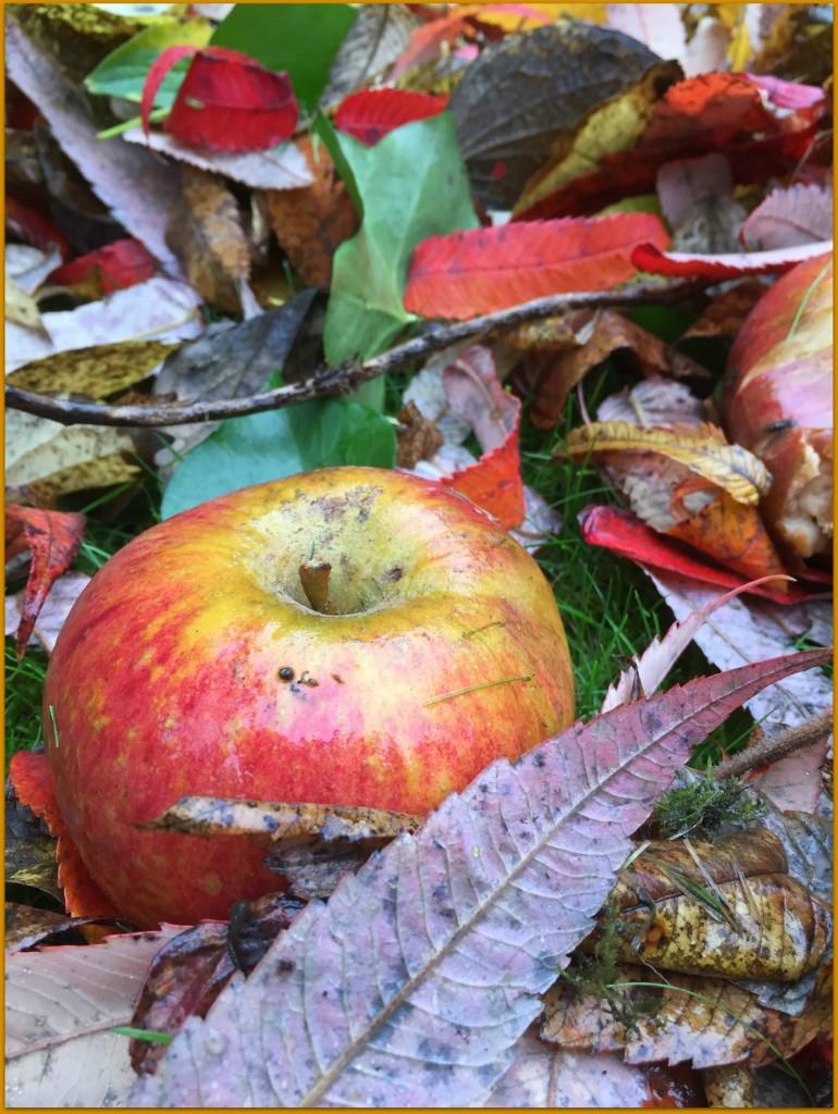 scandimummy_autumn_apple