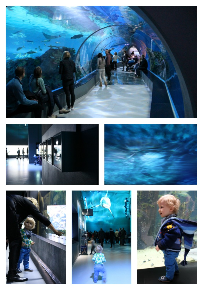 The impressive aquarium of Copenhagen known as The Blue Planet. Definitely worth a visit if you are in the area.