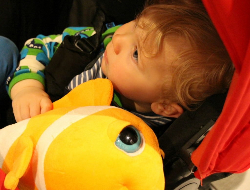 Caspian and his new cuddly clown fish.