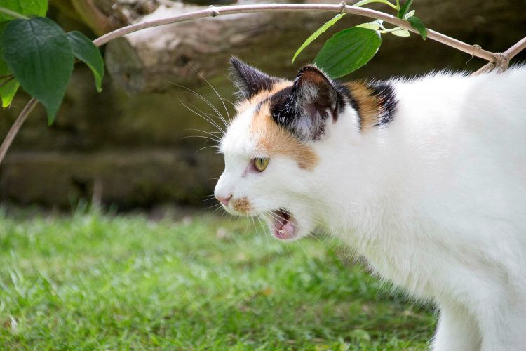 Practicing my photography skills on the neighbour's cat.