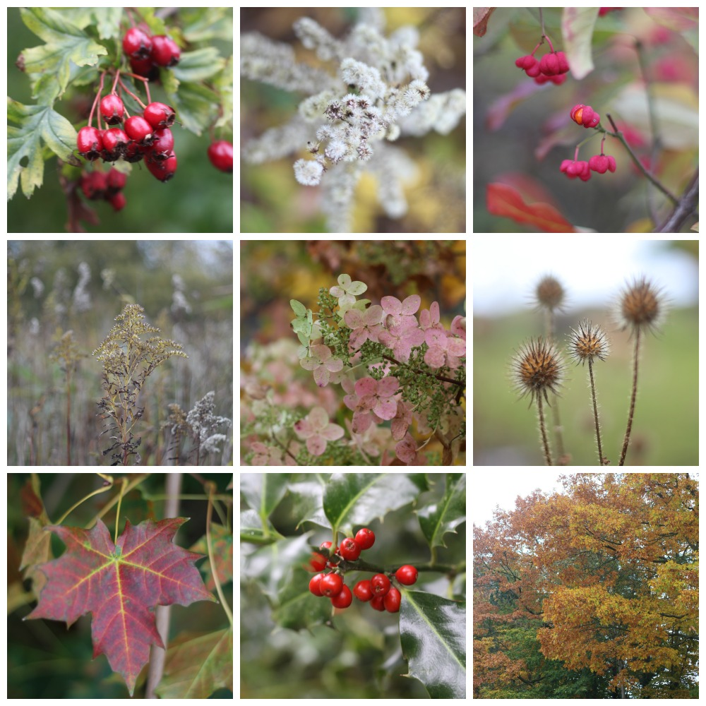 Autumn in Denmark with lots of beautiful colours