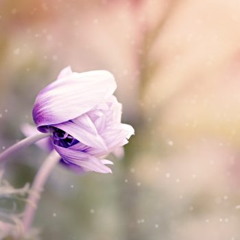 anemone-1533515_1280