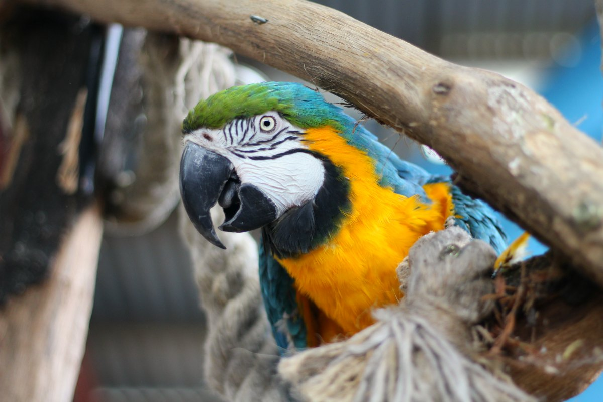 Parrot at Hounslow Urban Farm
