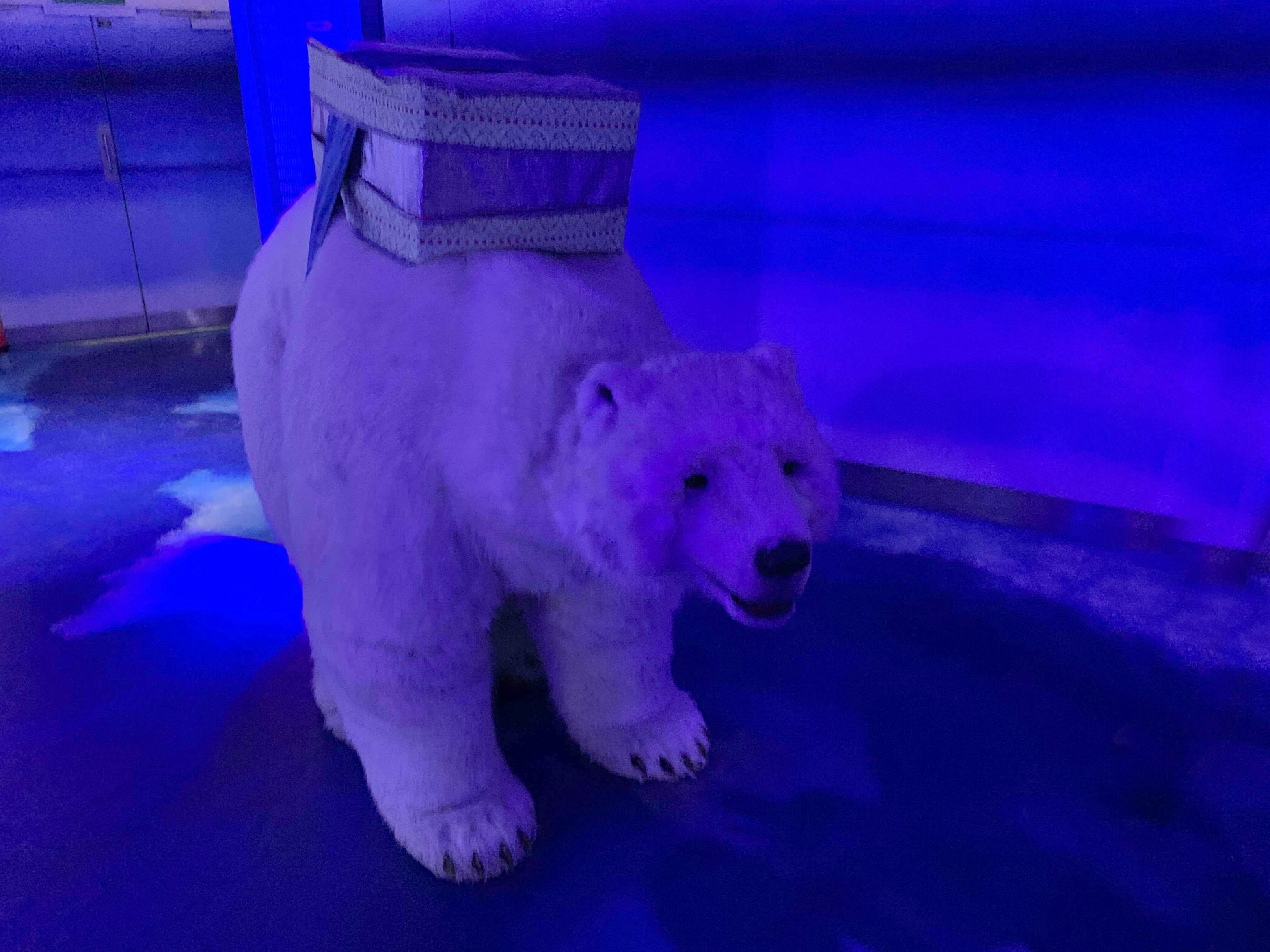 The augmented reality polar bear at the Polar Adventure at Sea Life London
